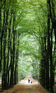 The splendours of a cathedral forest